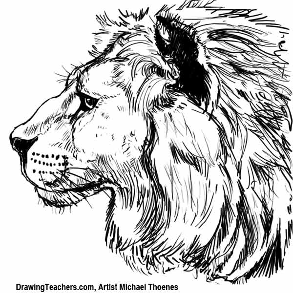 Lion drawing how to draw a lion