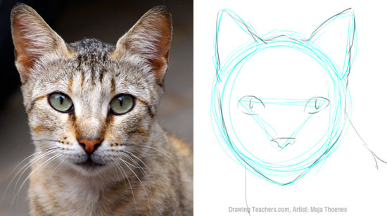 Pictures to Draw Cats