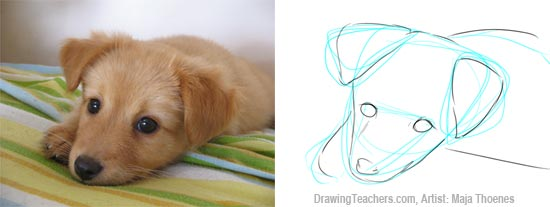 Pictures to Draw Dogs