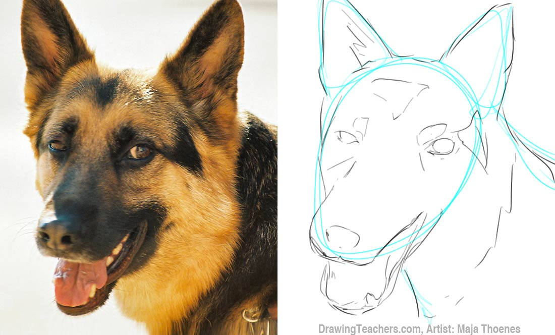 pictures to draw how to draw a german shepard