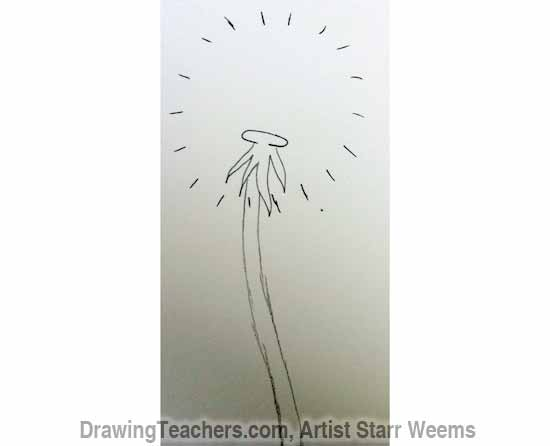How to Draw a Dandelion 3
