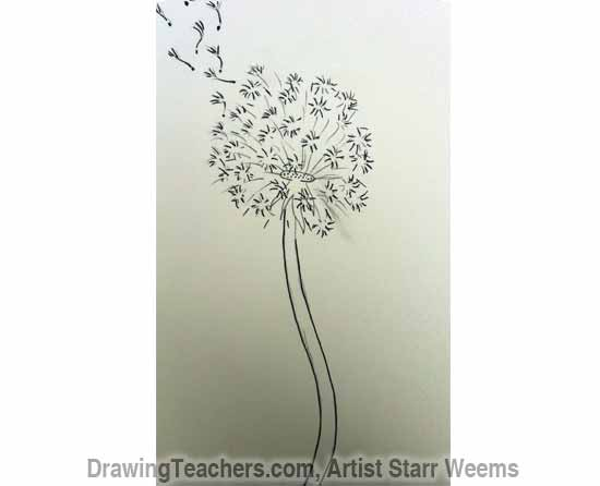 How to Draw a Dandelion 6