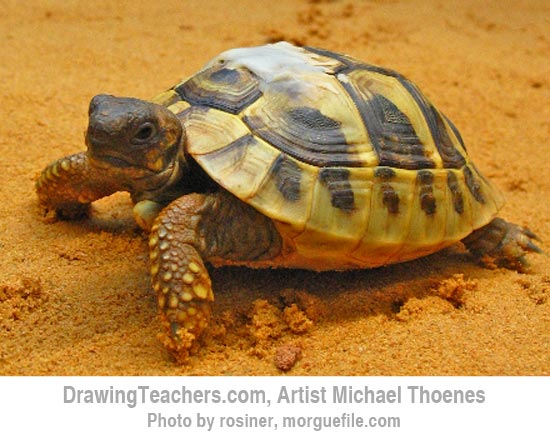 How to Draw a Turtle 2