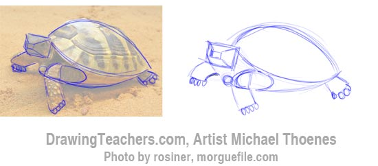 How to Draw a Turtle 3