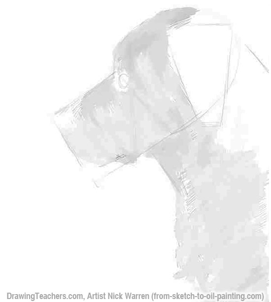 Learn How to Draw Dogs 4