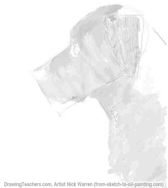 Learn How to Draw Dogs 5