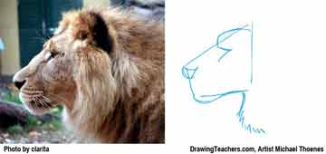 Lion Drawing Step 2 - How to Draw a Lion