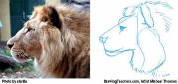Lion Drawing Step 3 - How to Draw a Lion