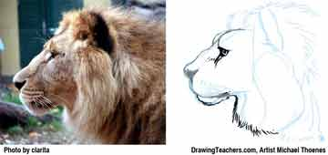 Lion Drawing Step 7 - How to Draw a Lion