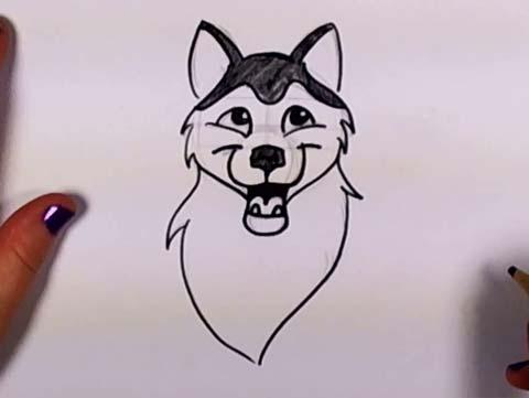 Draw a Husky 09