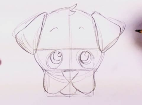 How to draw a puppy face 5