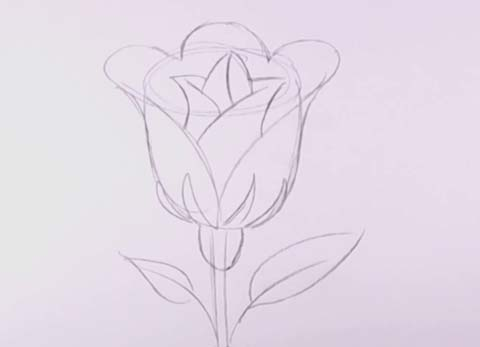 how to draw an open rose step by step instructions